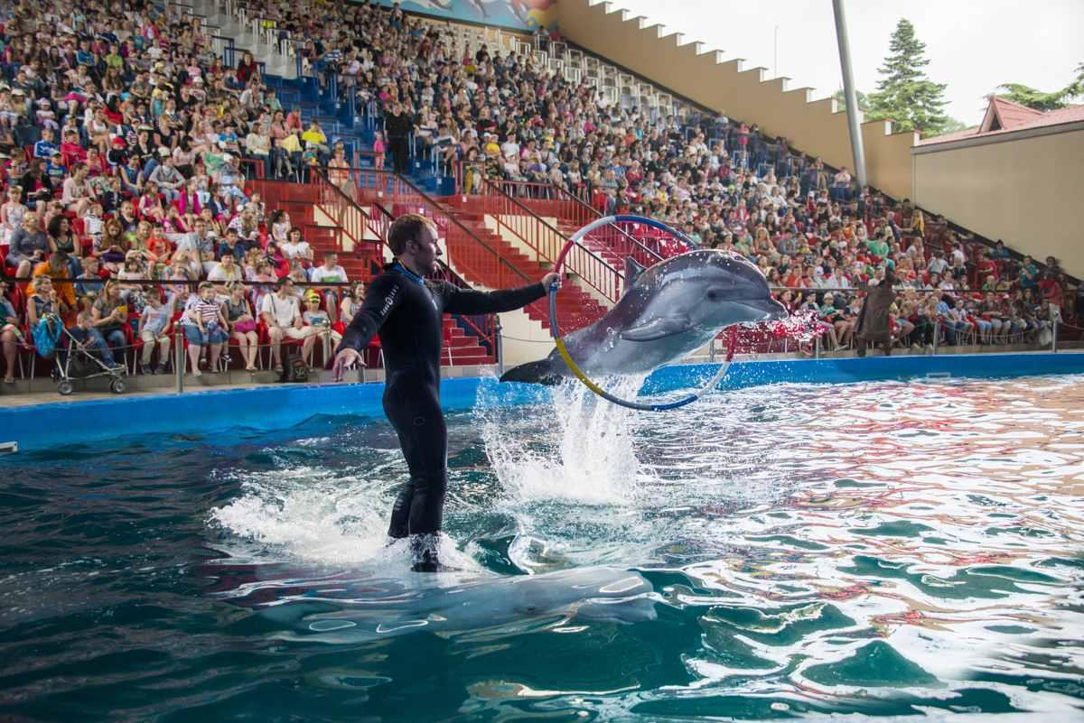 таком варианте дельфинарий лазаревское фото метро информационными